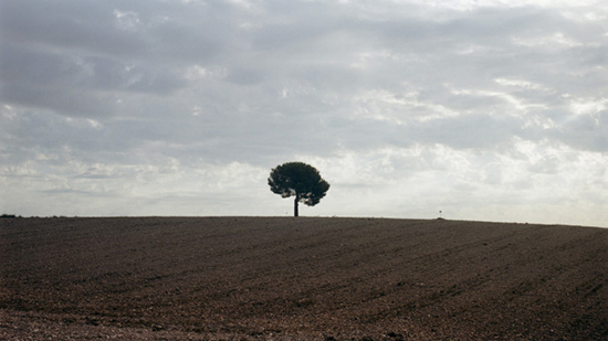 Tree in the middle of a field